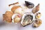 百草方牡蛎肽有用吗,黄精牡蛎肽有什么效果?