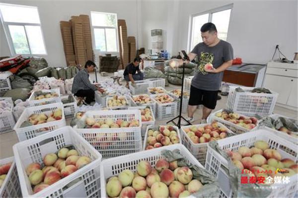 山东泰安刘台村肥桃搭乘电商快车 90%农户做起微商
