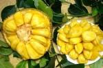菠萝蜜广告词微信朋友圈推销菠萝蜜的广告文案宣传语